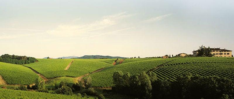 Piedmontese native grapes and international grapes