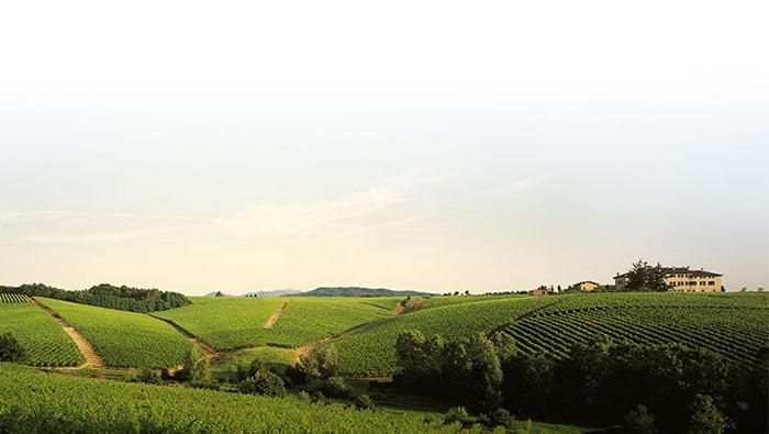 Vitigni autoctoni e vitigni internazionali: significato.