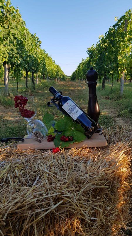pelvaro vino autoctono piemontese