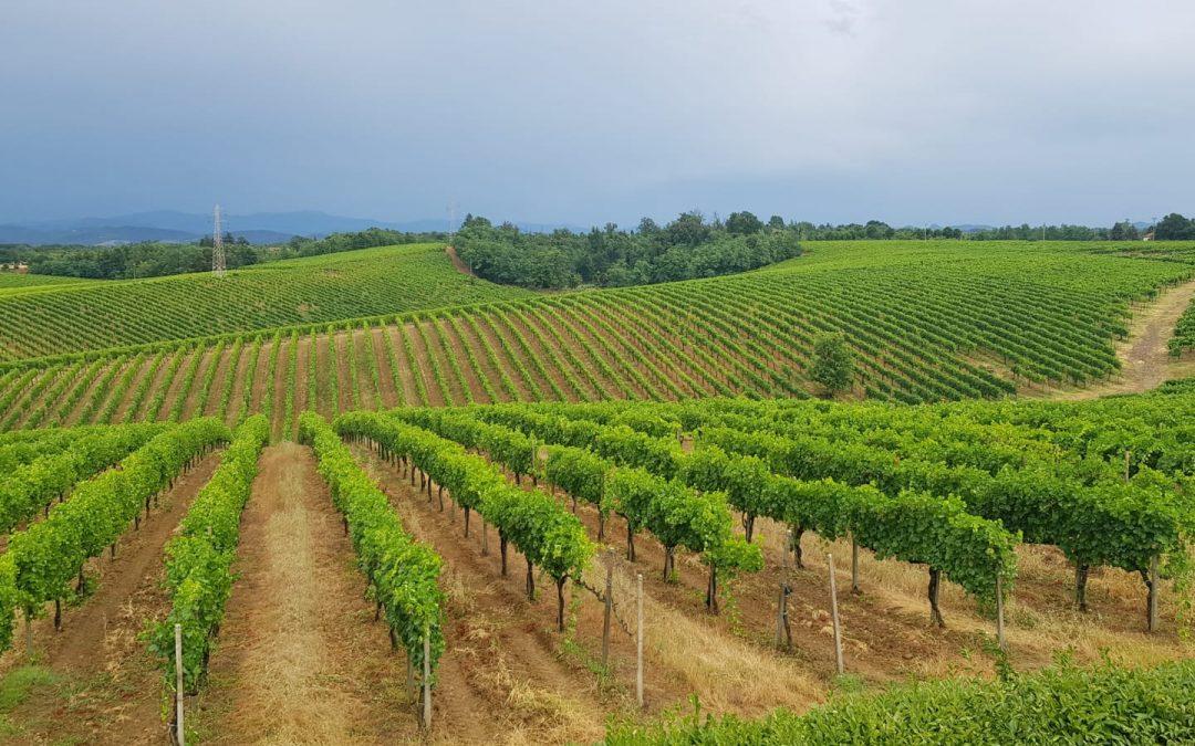 Vini biologici o vini tradizionali? Cosa è la differenza?