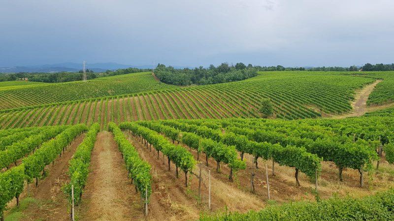 vigneto-monferrato-gavi